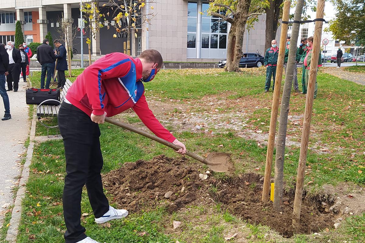 """Градоначелник и представници Спортског друштва """"Борац"""" посадили дрворед"""